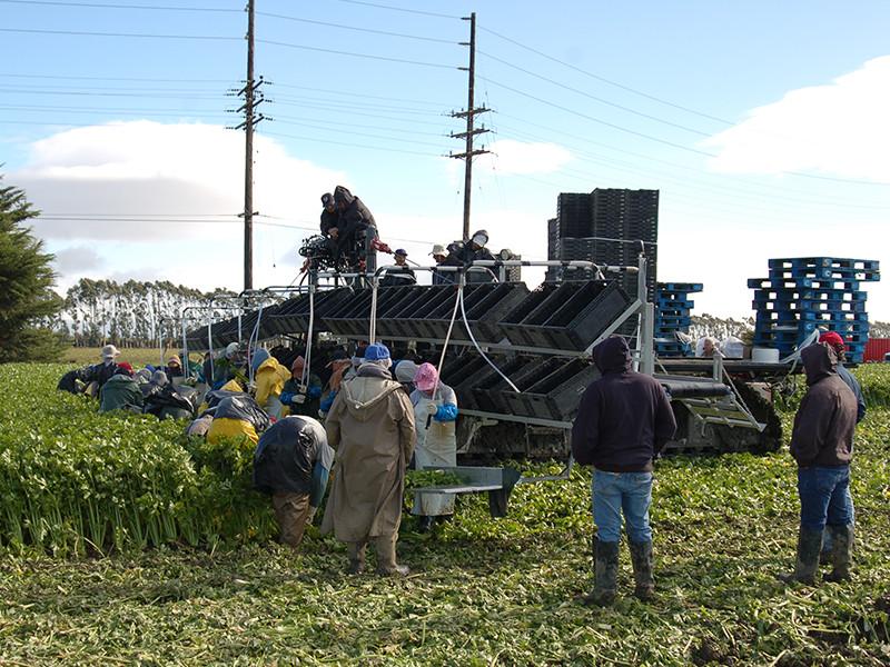 AG - Harvester 2